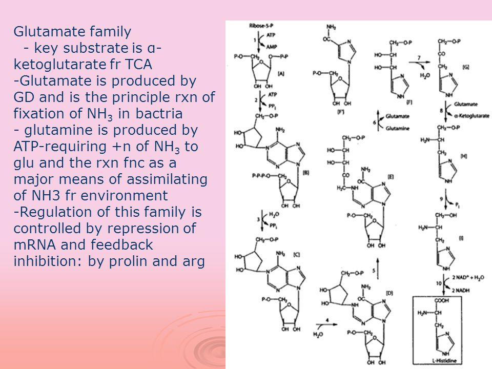 Glutamate family - key substrate is α-ketoglutarate fr TCA. Glutamate is produced by GD and is the principle rxn of fixation of NH3 in bactria.