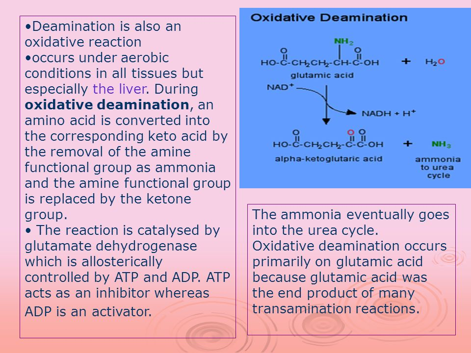 Deamination is also an oxidative reaction