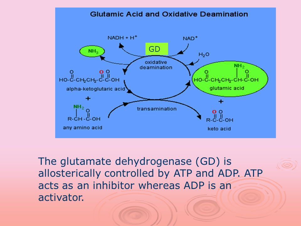 GD The glutamate dehydrogenase (GD) is allosterically controlled by ATP and ADP.