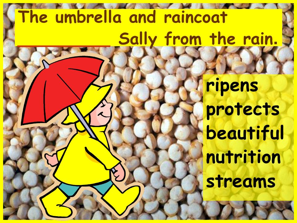 The umbrella and raincoat _________ Sally from the rain.