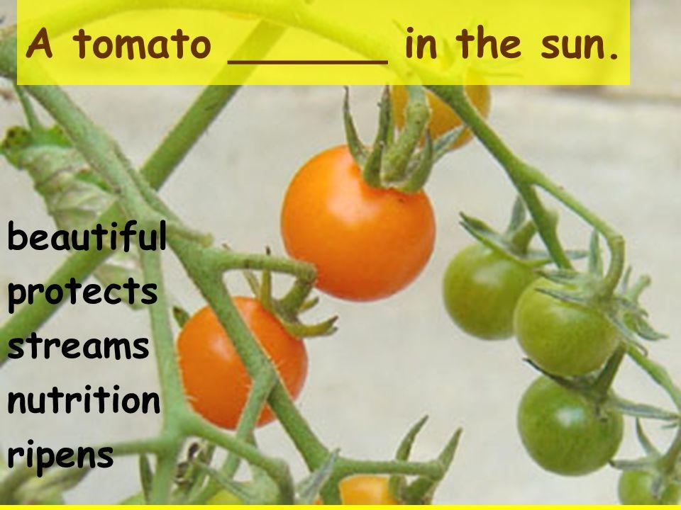 A tomato ______ in the sun.
