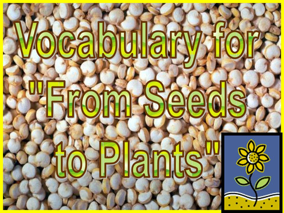 Vocabulary for From Seeds to Plants