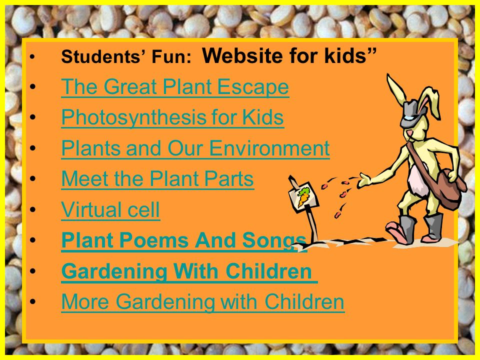 Photosynthesis for Kids Plants and Our Environment