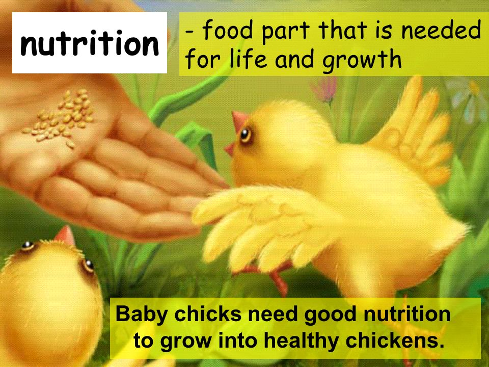 nutrition - food part that is needed for life and growth