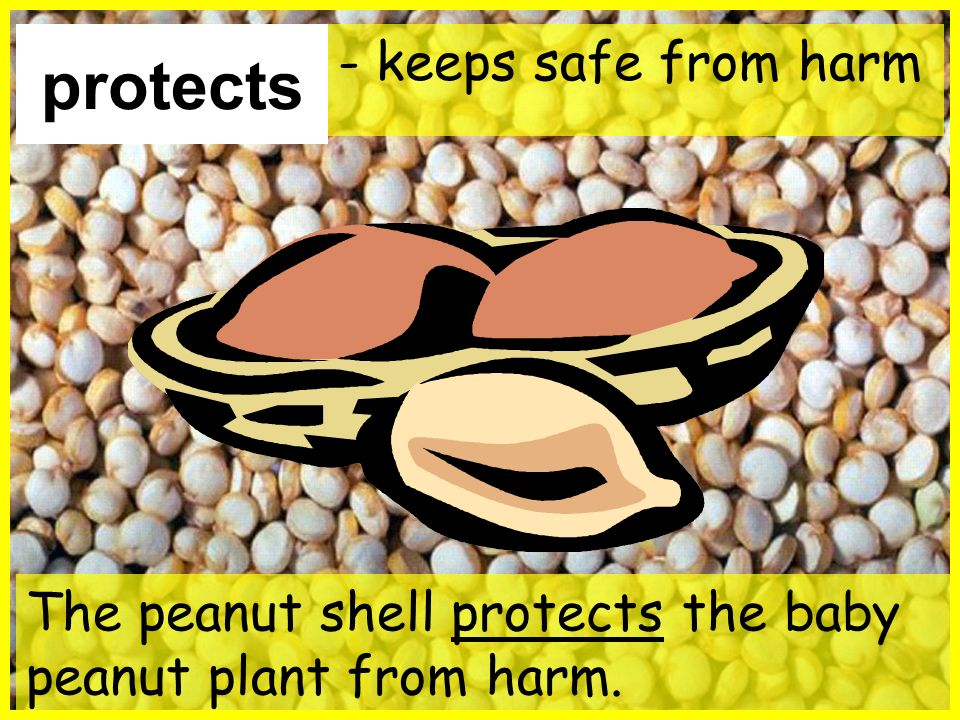 protects - keeps safe from harm