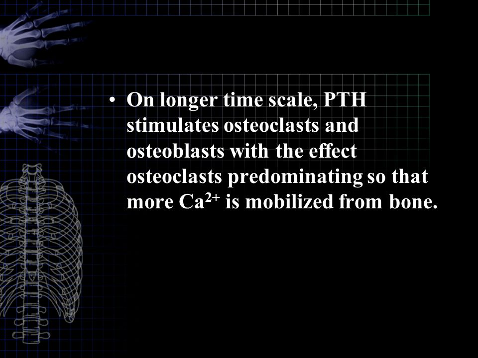 On longer time scale, PTH stimulates osteoclasts and osteoblasts with the effect osteoclasts predominating so that more Ca2+ is mobilized from bone.