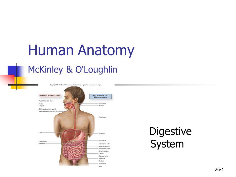 Human Anatomy McKinley & O Loughlin