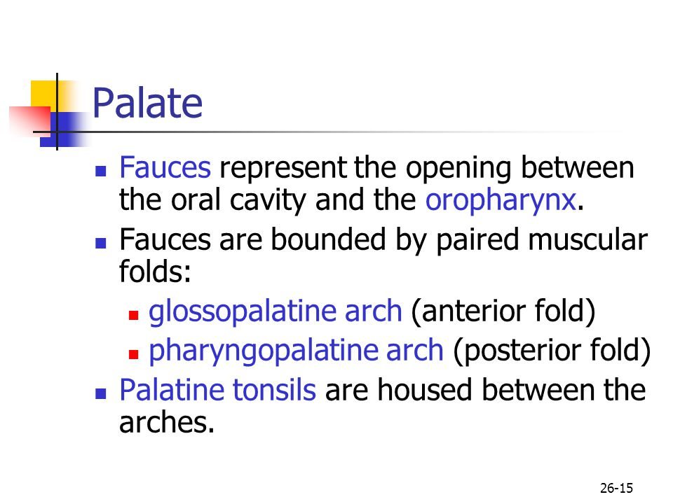 Palate Fauces represent the opening between the oral cavity and the oropharynx. Fauces are bounded by paired muscular folds:
