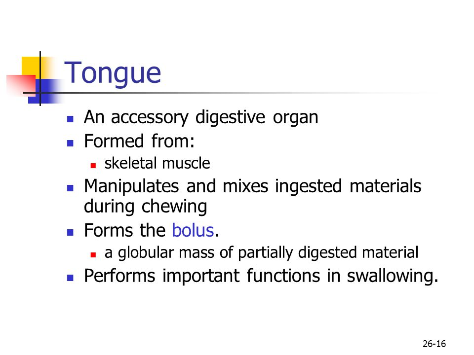Tongue An accessory digestive organ Formed from: