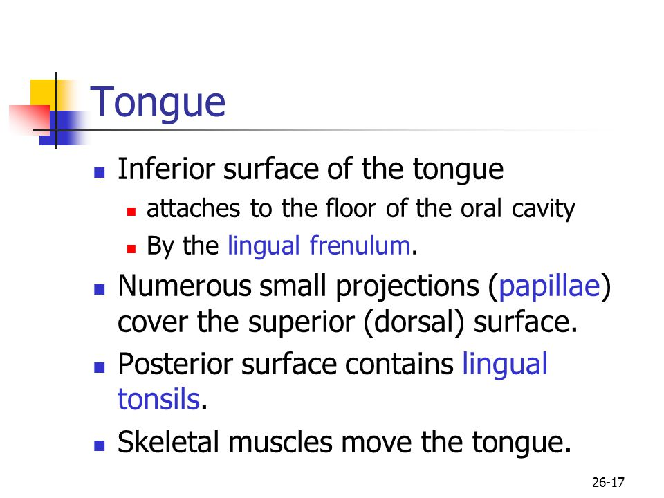 Tongue Inferior surface of the tongue