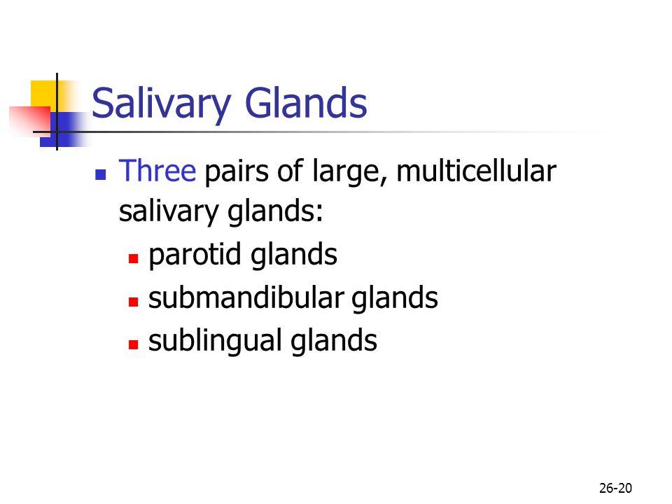 Salivary Glands Three pairs of large, multicellular salivary glands:
