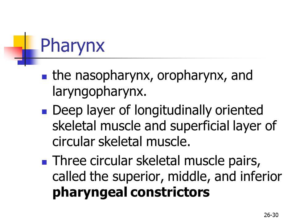 Pharynx the nasopharynx, oropharynx, and laryngopharynx.