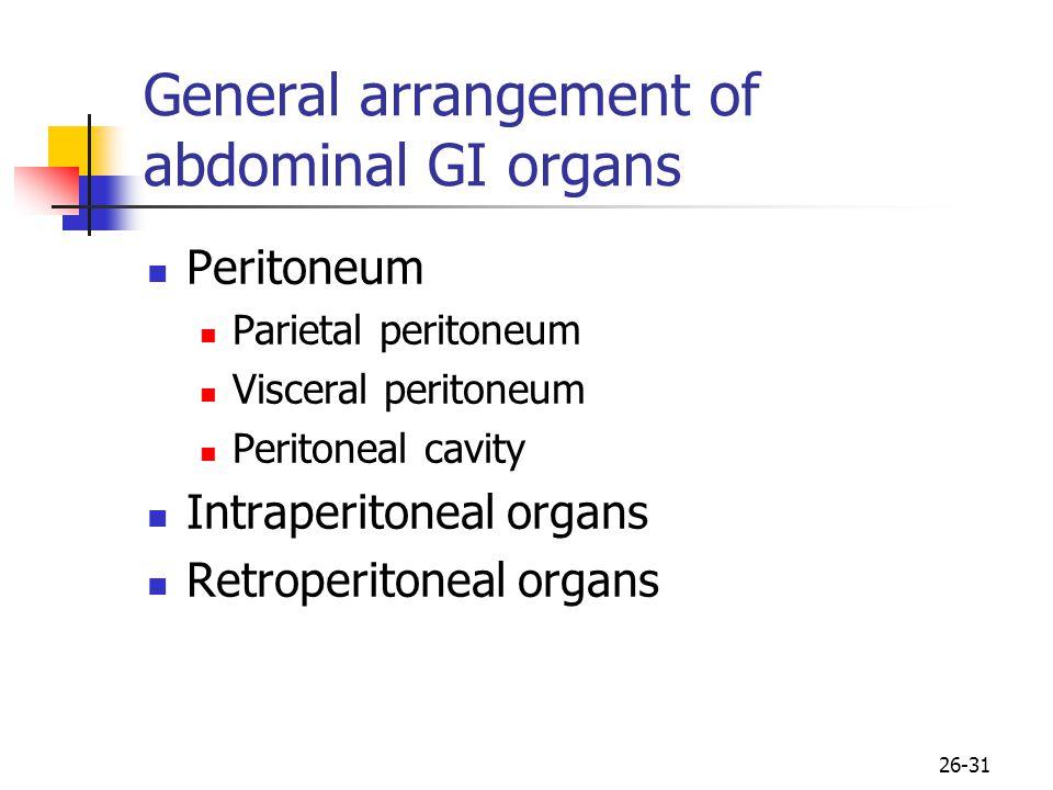General arrangement of abdominal GI organs