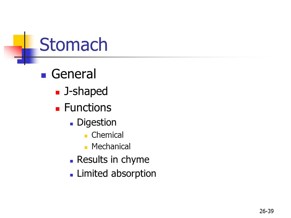 Stomach General J-shaped Functions Digestion Results in chyme