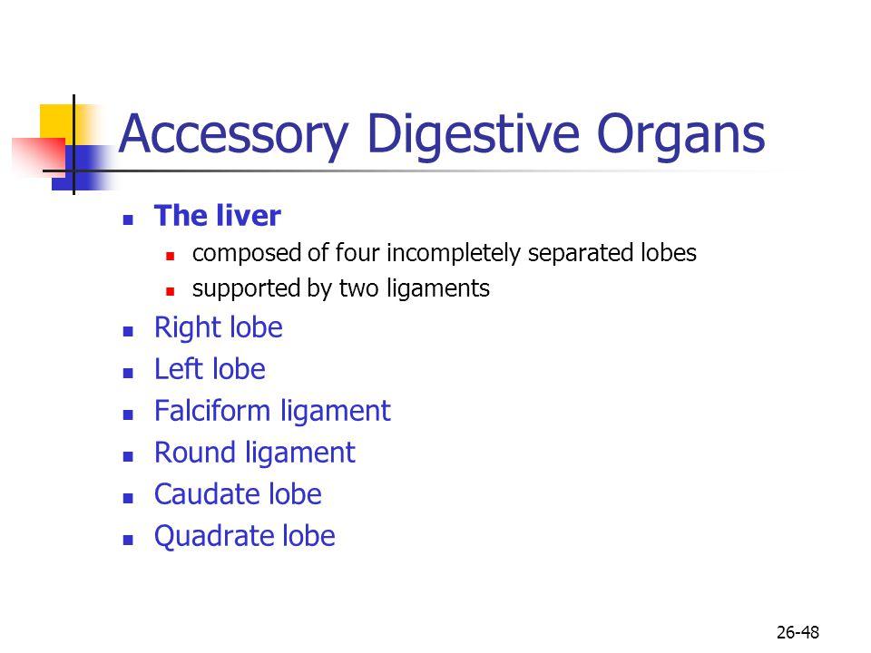 Accessory Digestive Organs