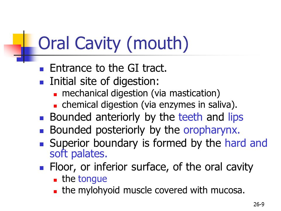 Oral Cavity (mouth) Entrance to the GI tract.