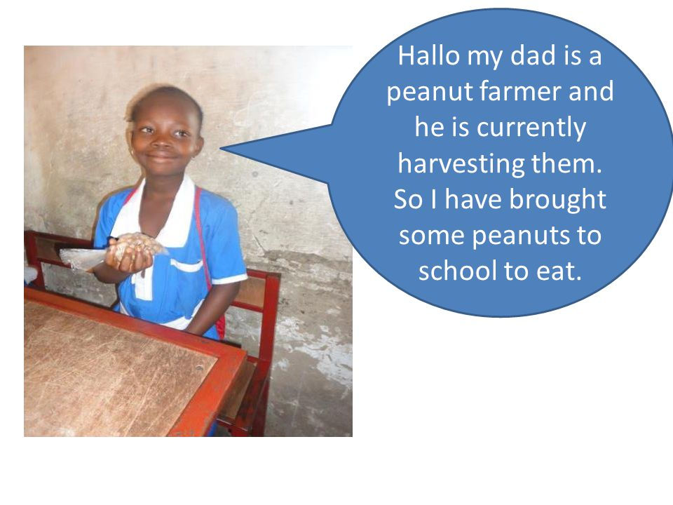 Hallo my dad is a peanut farmer and he is currently harvesting them