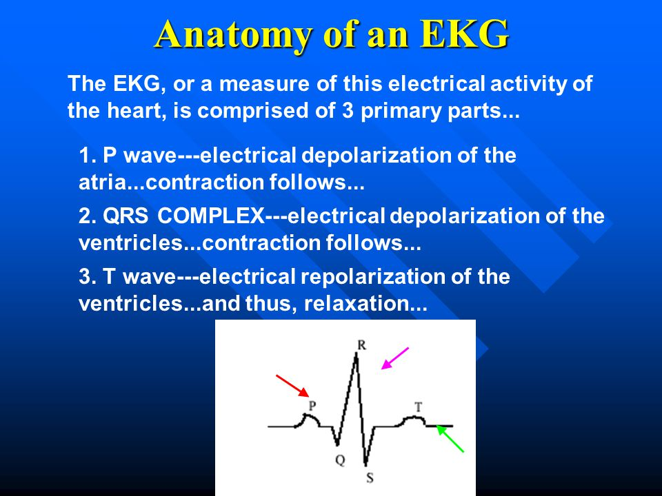 Anatomy of an EKG The EKG, or a measure of this electrical activity of the heart, is comprised of 3 primary parts...