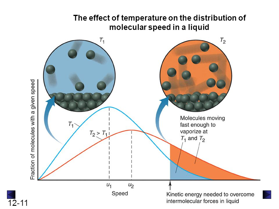 The effect of temperature on the distribution of molecular speed in a liquid