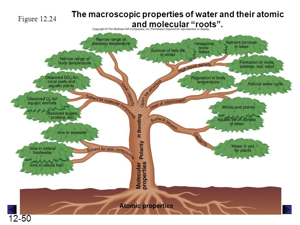 The macroscopic properties of water and their atomic and molecular roots .