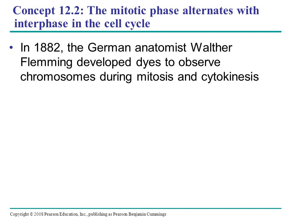 Concept 12.2: The mitotic phase alternates with interphase in the cell cycle