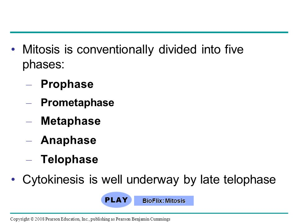 Mitosis is conventionally divided into five phases: