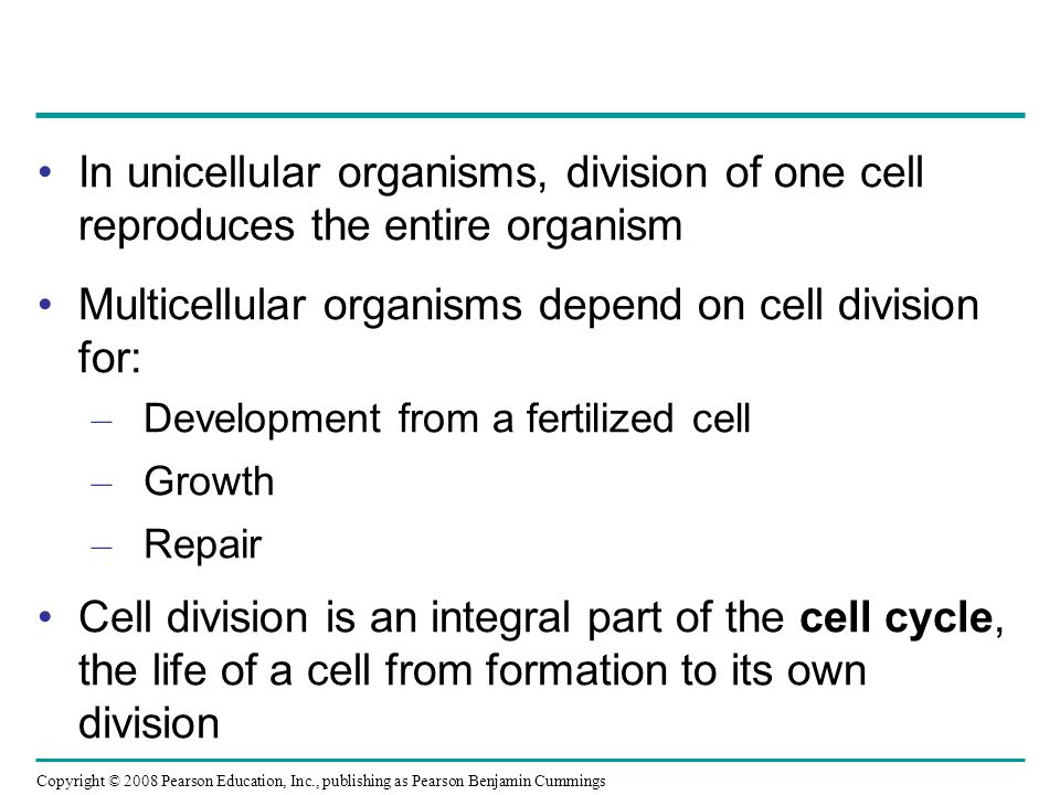 Multicellular organisms depend on cell division for: