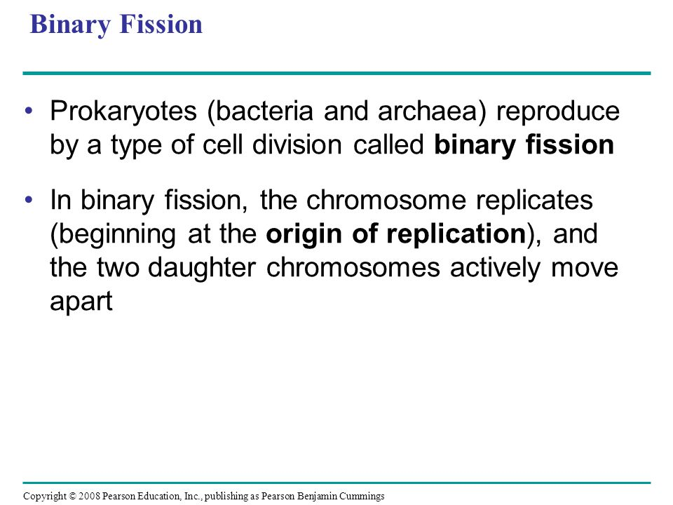 Binary Fission Prokaryotes (bacteria and archaea) reproduce by a type of cell division called binary fission.