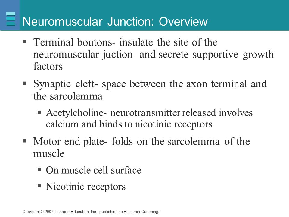 Neuromuscular Junction: Overview
