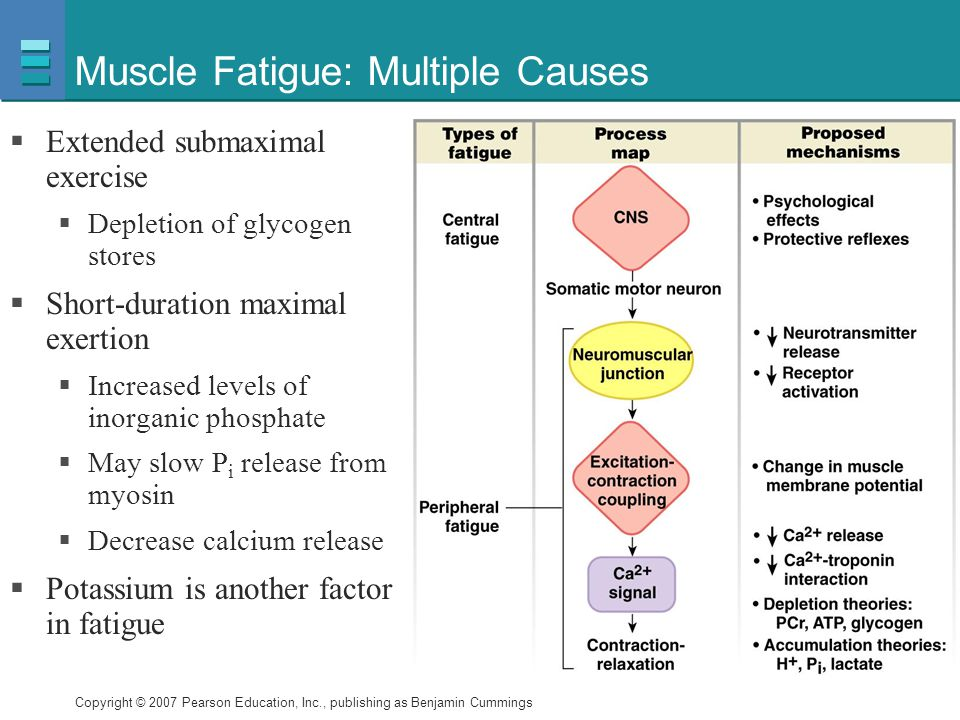 Muscle Fatigue: Multiple Causes