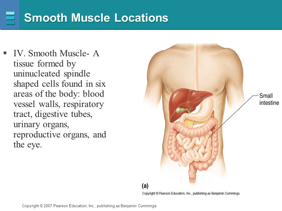 Smooth Muscle Locations