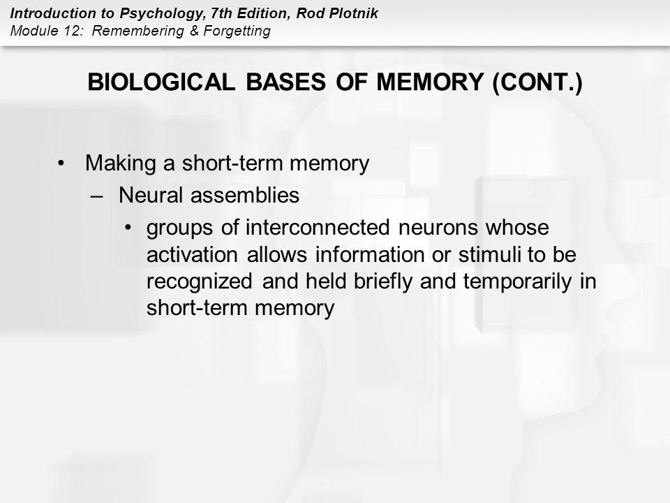 BIOLOGICAL BASES OF MEMORY (CONT.)