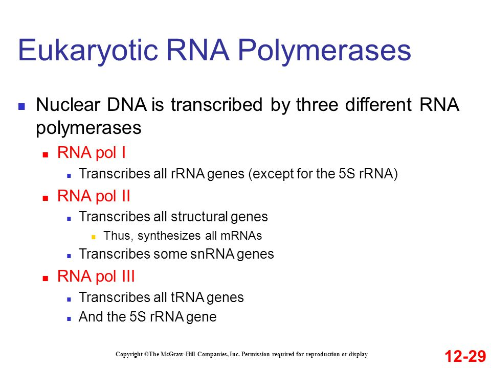 Eukaryotic RNA Polymerases