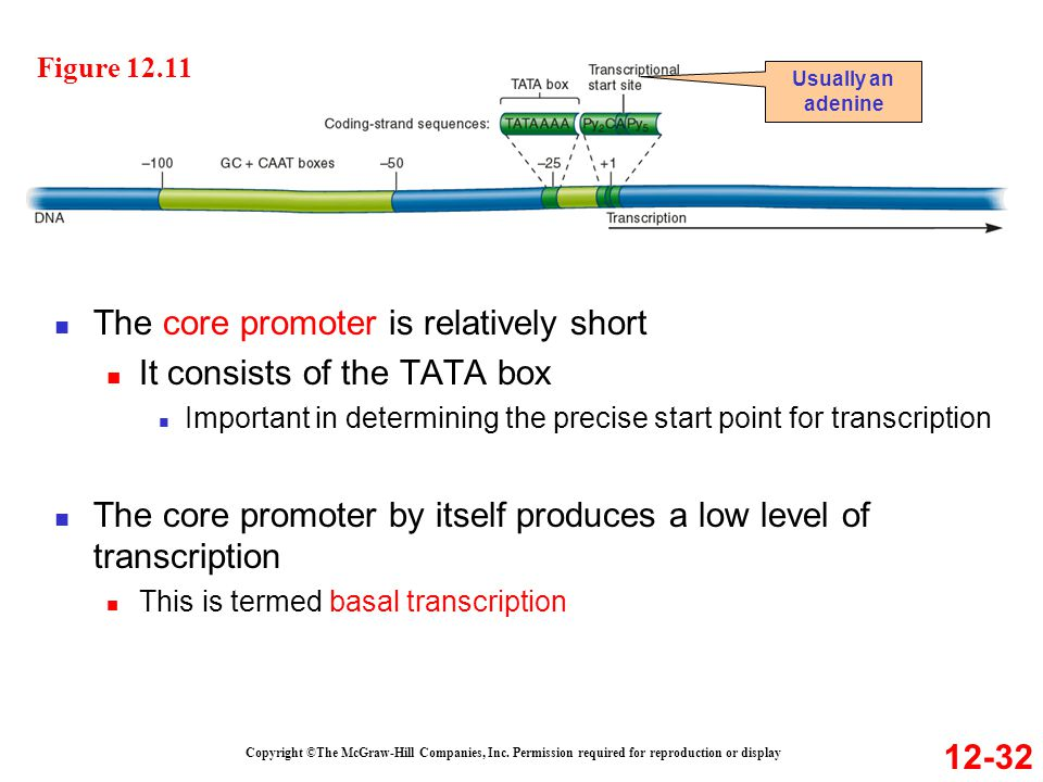 The core promoter is relatively short It consists of the TATA box
