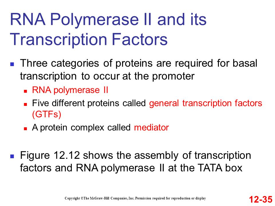 RNA Polymerase II and its Transcription Factors