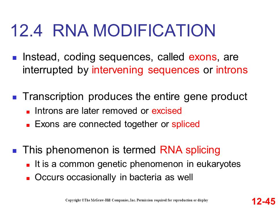 12.4 RNA MODIFICATION Instead, coding sequences, called exons, are interrupted by intervening sequences or introns.