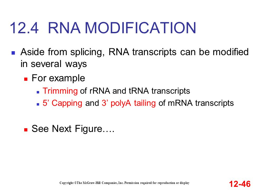 12.4 RNA MODIFICATION Aside from splicing, RNA transcripts can be modified in several ways. For example.