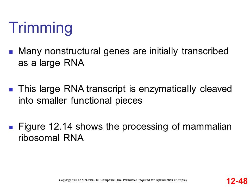 Trimming Many nonstructural genes are initially transcribed as a large RNA.
