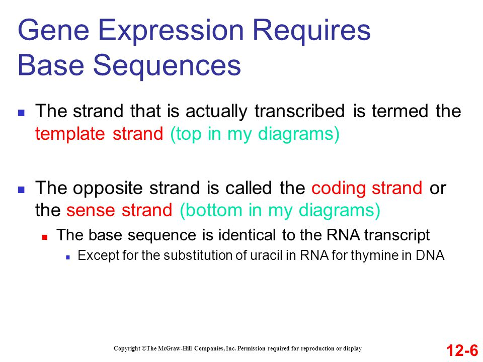 Gene Expression Requires Base Sequences