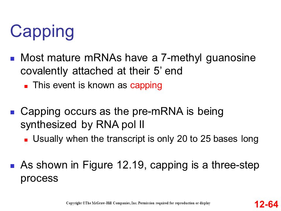 Capping Most mature mRNAs have a 7-methyl guanosine covalently attached at their 5' end. This event is known as capping.