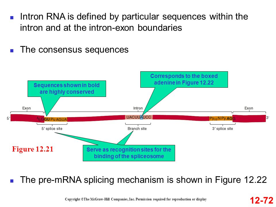 The consensus sequences