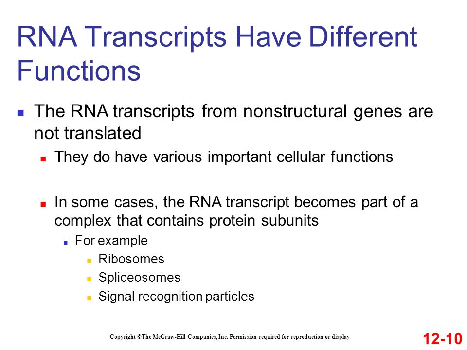 RNA Transcripts Have Different Functions