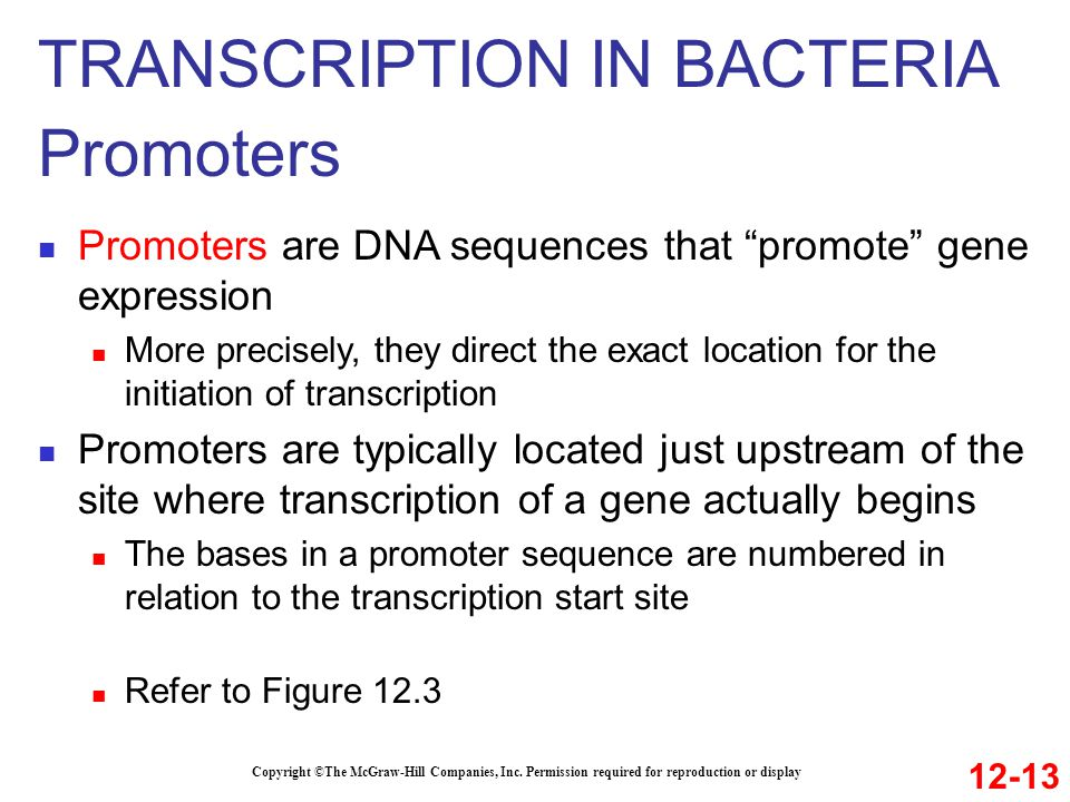 TRANSCRIPTION IN BACTERIA Promoters