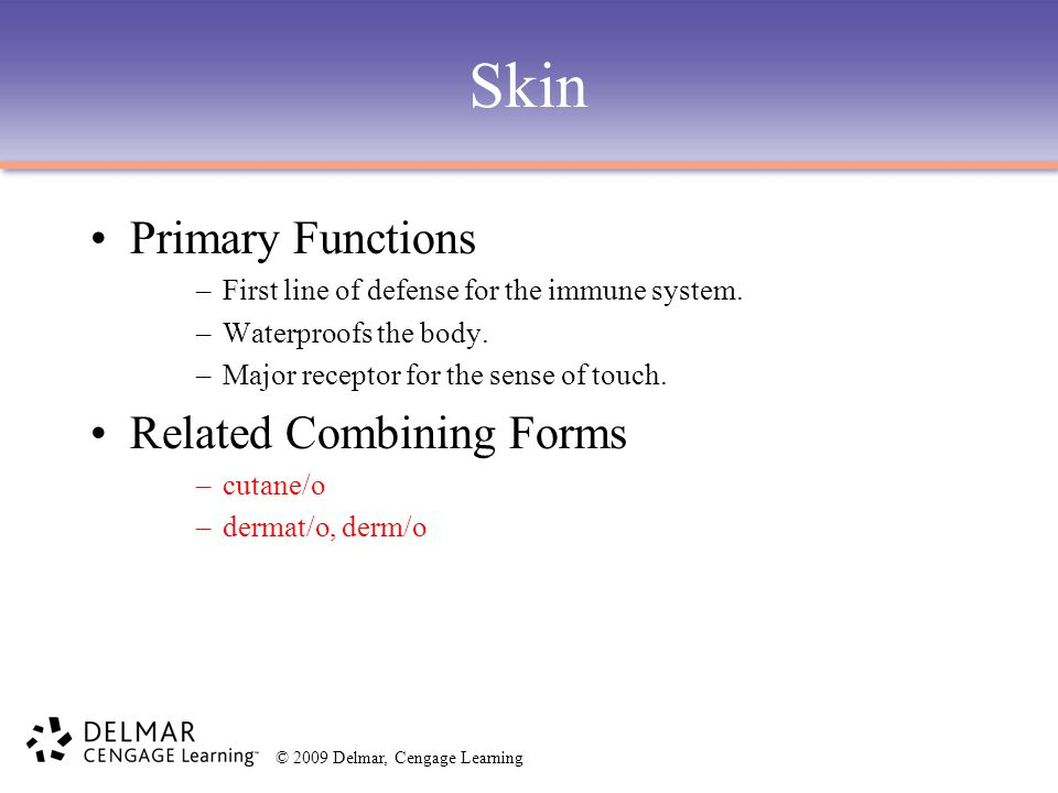 Skin Primary Functions Related Combining Forms