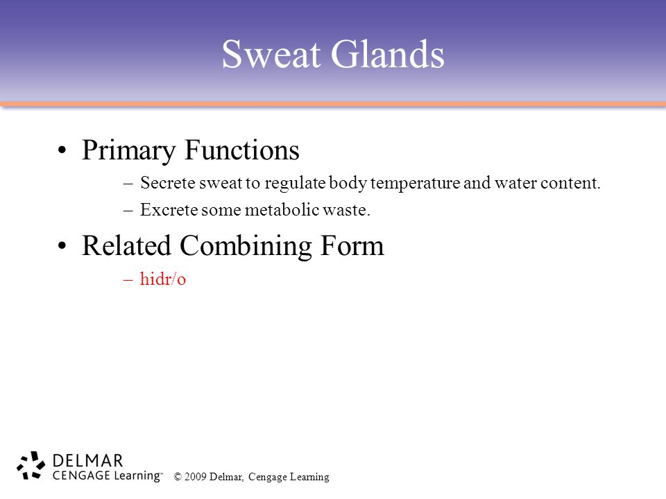 Sweat Glands Primary Functions Related Combining Form