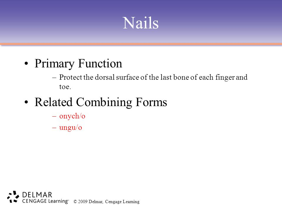 Nails Primary Function Related Combining Forms