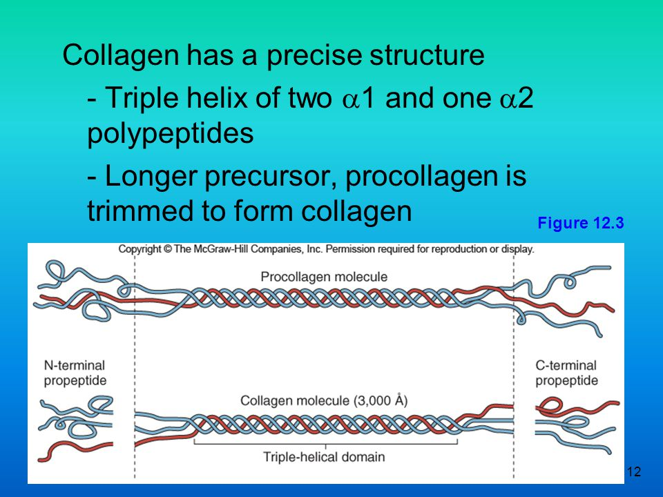 Collagen has a precise structure