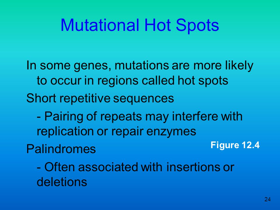 Mutational Hot Spots In some genes, mutations are more likely to occur in regions called hot spots.