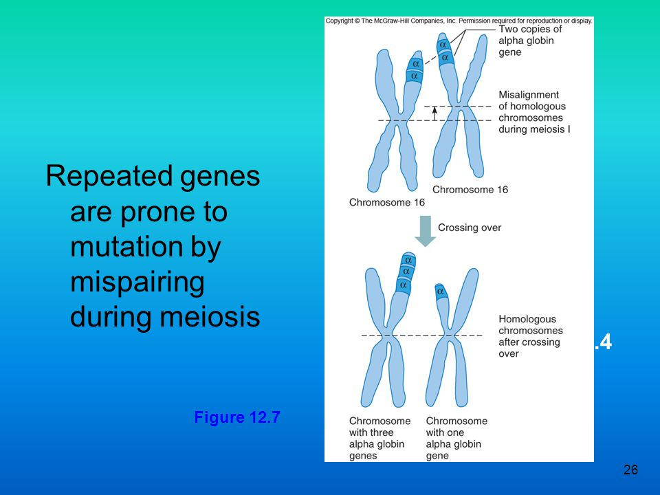 Repeated genes are prone to mutation by mispairing during meiosis