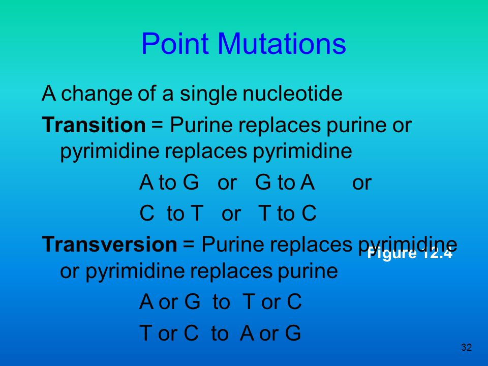 Point Mutations A change of a single nucleotide